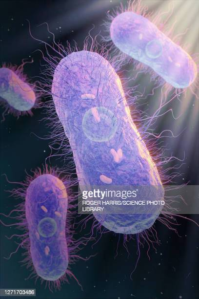 salmonella bacteria, illustration - digestive system stock illustrations