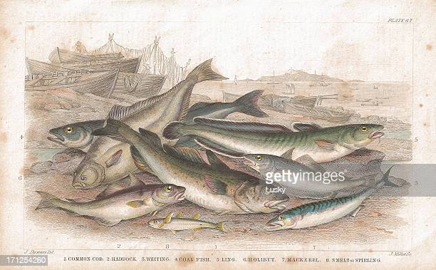 Salt Water Fish old lithographic print from 1852