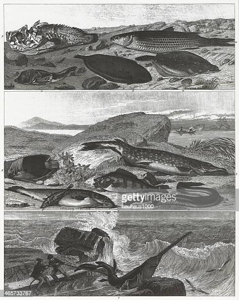 Saltwater &Freshwater Fish Engraving