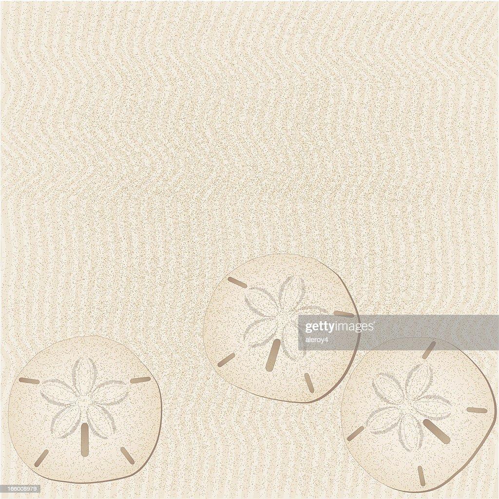 sand dollar background