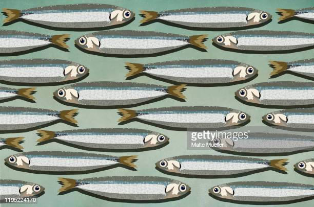 sardines background - food and drink stock illustrations