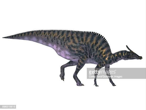saurolophus dinosaur on white background. - animal body stock illustrations, clip art, cartoons, & icons