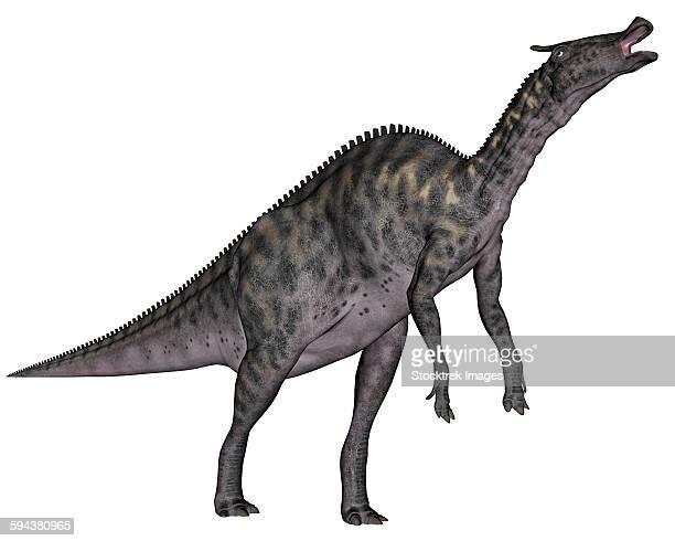 saurolophus dinosaur, white background. - hadrosaurid stock illustrations, clip art, cartoons, & icons