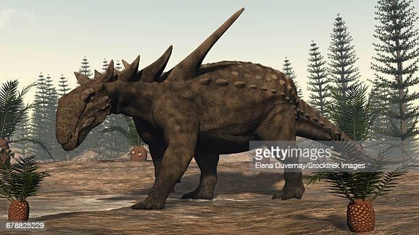 sauropelta dinosaur amongst cycadeoidea plants and calamite trees. - thyreophora stock illustrations, clip art, cartoons, & icons