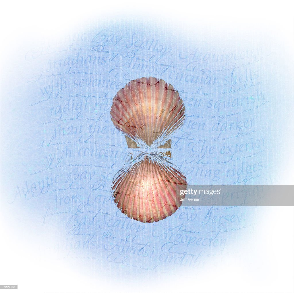 Scallop on Wavy Descriptive Background : ストックイラストレーション