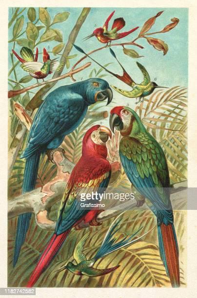 ilustraciones, imágenes clip art, dibujos animados e iconos de stock de escote hyacinth macaw colibri en la ilustración de la selva tropical - pájaro tropical