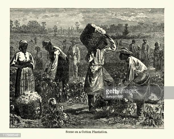 scene on a cotton plantation, southern usa, 19th century - cotton stock illustrations, clip art, cartoons, & icons