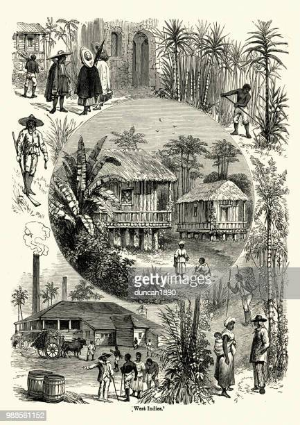 scenes from the west indies in the 19th century - history stock illustrations, clip art, cartoons, & icons