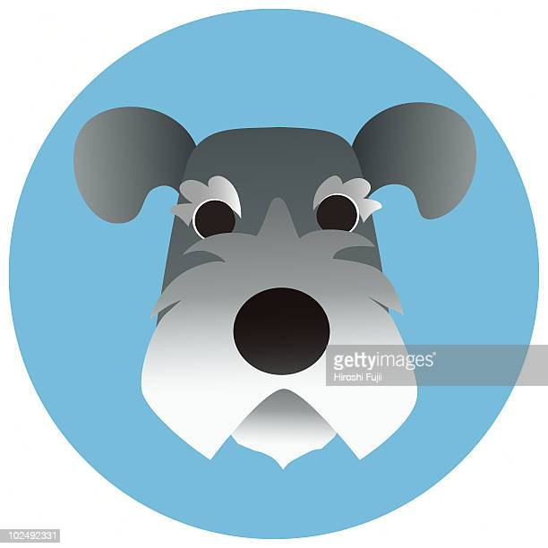 A Schnauzer on a blue circular background
