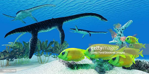 ilustraciones, imágenes clip art, dibujos animados e iconos de stock de a school of lemonpeel angelfish keep a wary eye on three large predatory plesiosaurus dinosaurs. - monstruo del lago ness