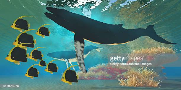 a school of pennant fish swim by two humpback whales near a coral reef. - humpback whale stock illustrations, clip art, cartoons, & icons