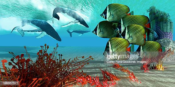 a school of redtail butterflyfish watch as a herd of humpback whales dive from the ocean surface. - butterflyfish stock illustrations, clip art, cartoons, & icons