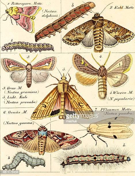 science illustration - zoology stock illustrations