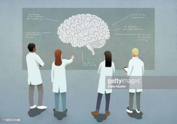 scientists discussing brain diagram - neuroscience stock illustrations
