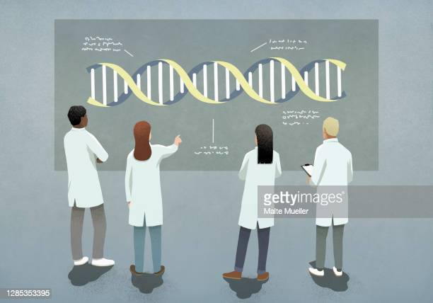 scientists examining and discussing dna double helix diagram - stem topic stock illustrations