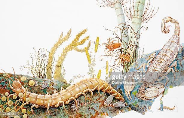 Scorpion and venomous centipede in natural habitat