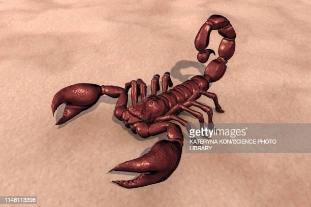 scorpion, illustration - deathstalker stock illustrations