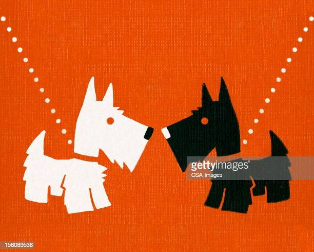 Scottish Terrier and West Highland Terrier Dogs