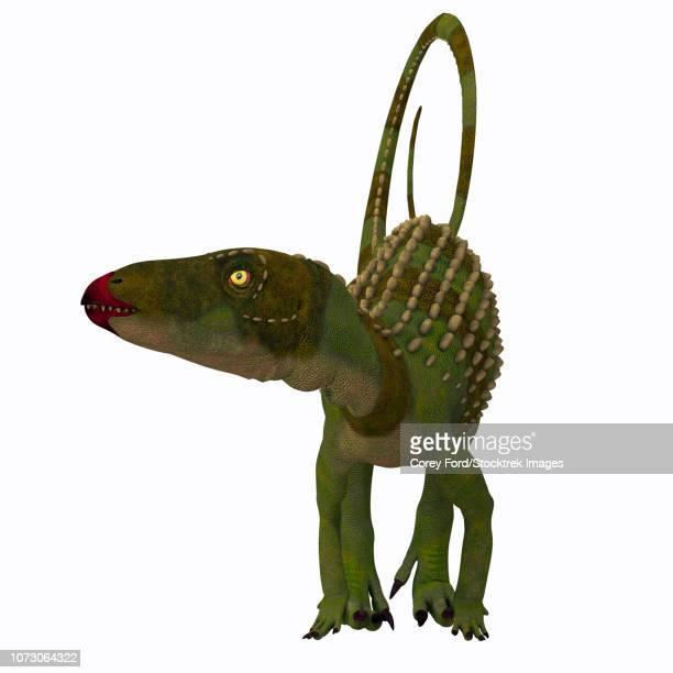 Scutellosaurus dinosaur, front view.