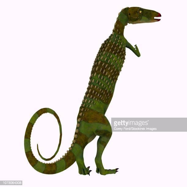 scutellosaurus dinosaur on white background. - thyreophora stock illustrations, clip art, cartoons, & icons