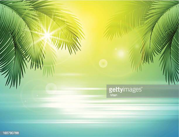 sea and palm landscape - seascape stock illustrations, clip art, cartoons, & icons