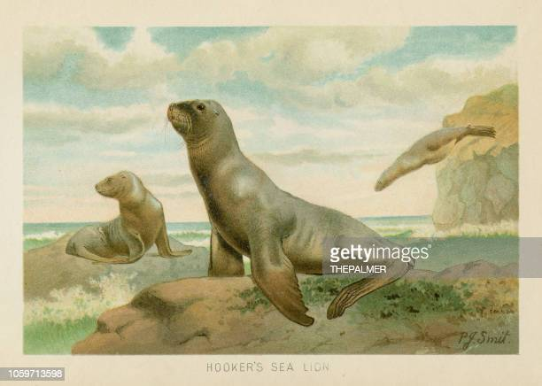 Sea lion chromolithograph 1896