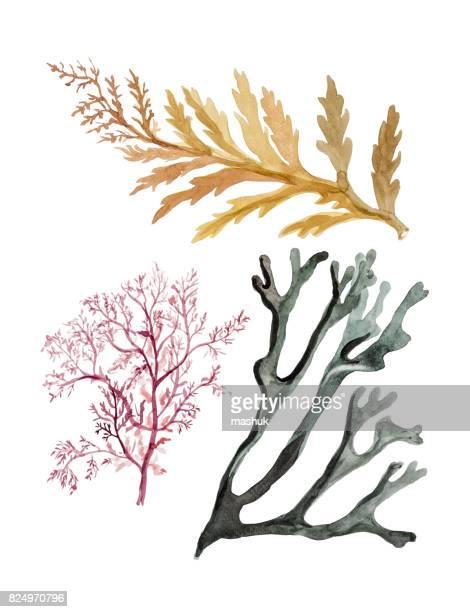 Carcasa y algas marinas mar