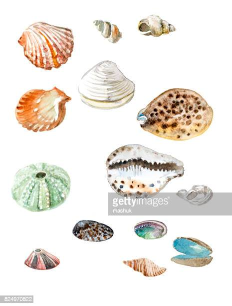 Sea shell and seaweed