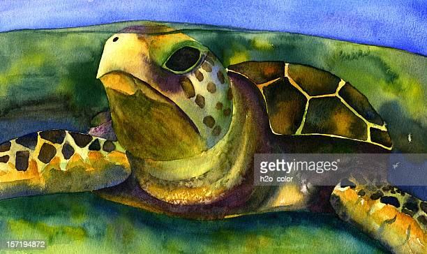 sea turtle - sea turtle stock illustrations