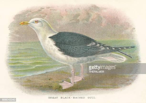 イギリス 1897 からかもめ鳥 - 海洋性の鳥点のイラスト素材/クリップアート素材/マンガ素材/アイコン素材