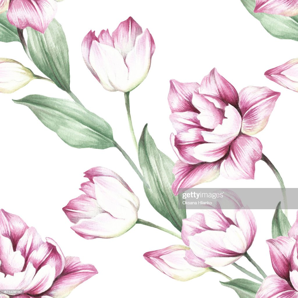 seamless pattern with tulips hand draw watercolor illustration stock illustration