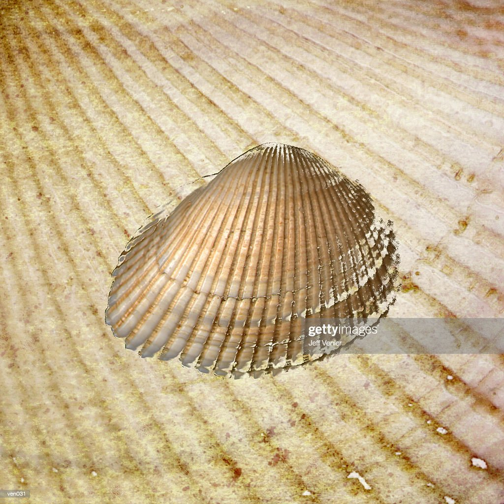 Seashell on Sand Background : Ilustración de stock
