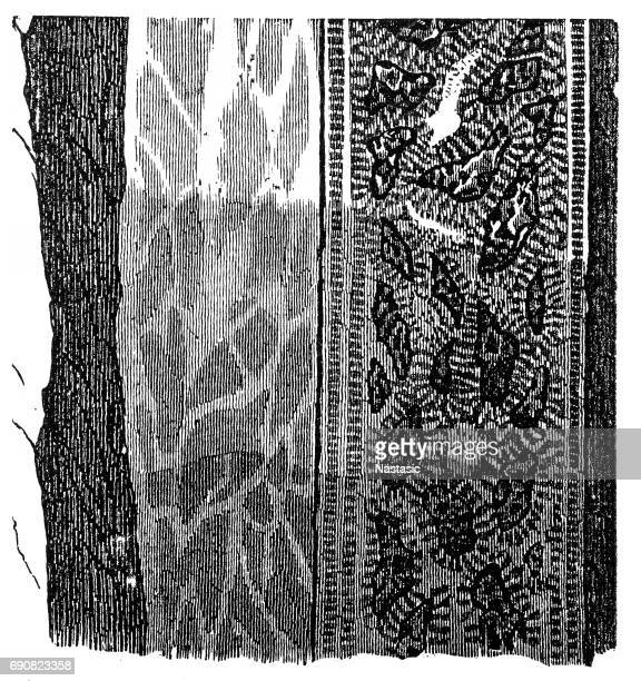 section of a terrain ,double vein - cross section stock illustrations