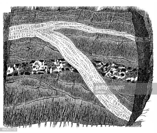section of a terrain - cross section stock illustrations