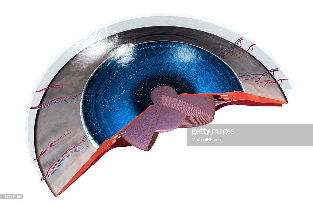 Sectional Anatomy Of The Eye Stock Illustration Getty Images