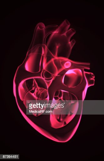 Sectional Anatomy Of The Heart Stock Illustration | Getty Images