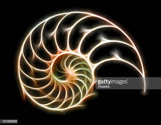 sectioned shell of a nautilus - nautilus stock illustrations