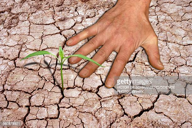 seedling and hand on cracked earth - head above water stock illustrations