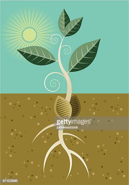 seedling - seedling stock illustrations
