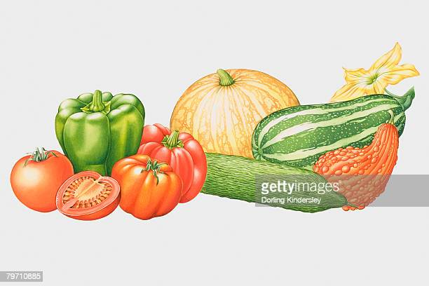 selection of vegetables - marrom stock illustrations