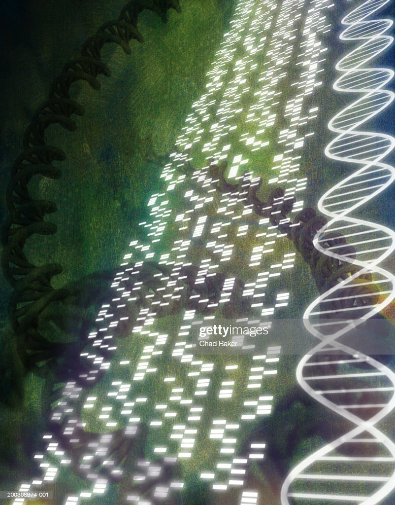 DNA sequence and helix models (Digital) : stock illustration