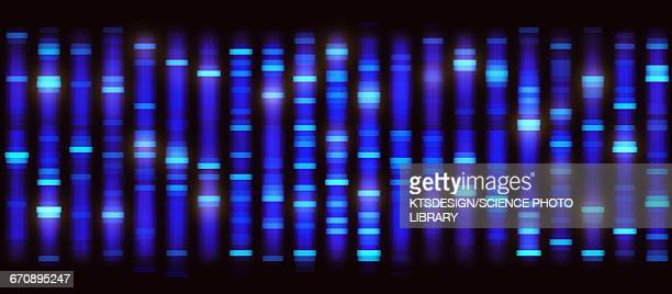 DNA sequencing, illustration