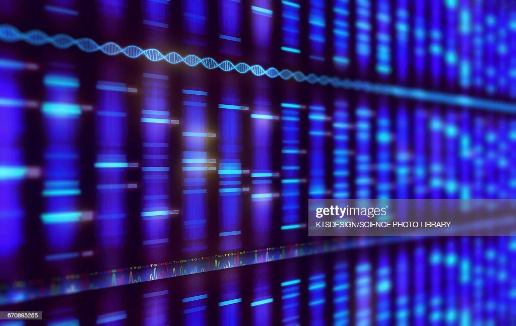 DNA sequencing, illustration : stock illustration