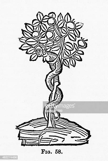 Serpent in the Apple Tree Christian Symbolism Engraving