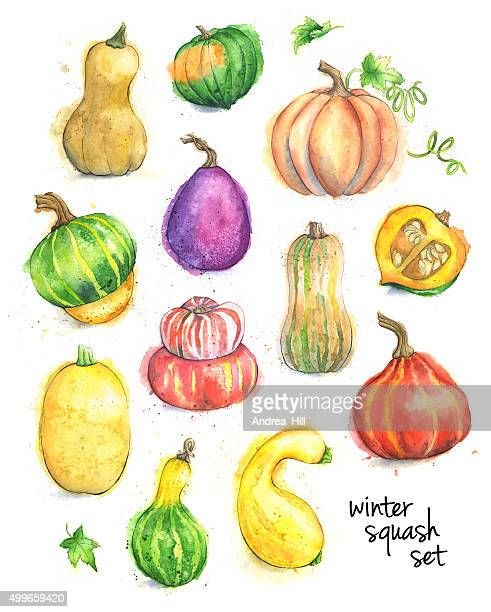 Set of Different Types of Squash Painted in Watercolor