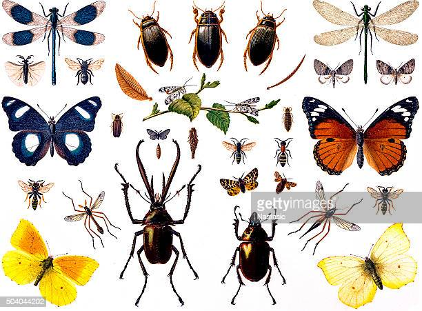 set of insects - collection stock illustrations, clip art, cartoons, & icons