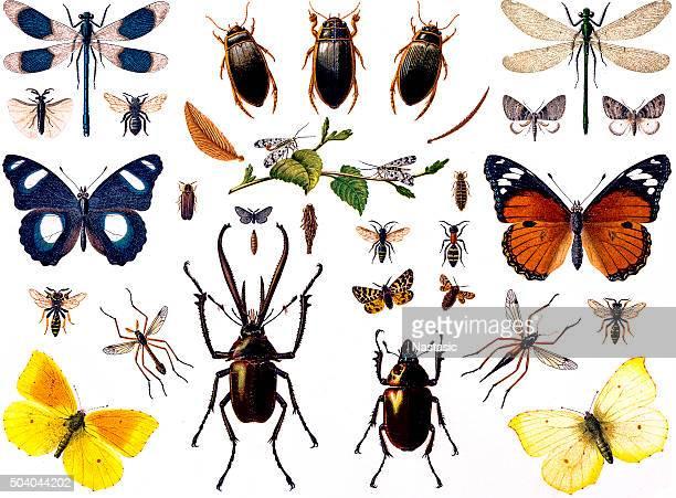 illustrations, cliparts, dessins animés et icônes de ensemble d'insectes - coccinelle