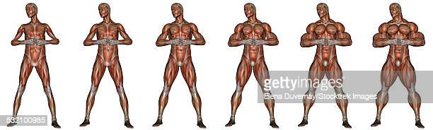 set of six men showing progression to become a muscular man, isolated on white background. - forearm stock illustrations, clip art, cartoons, & icons