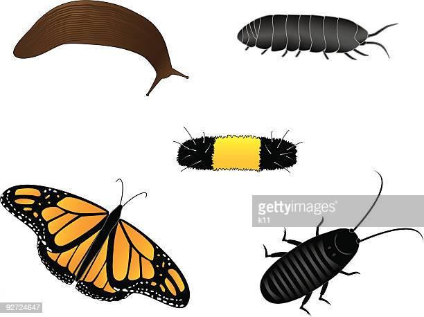 illustrations, cliparts, dessins animés et icônes de ensemble de vecteur illustré les insectes - limace