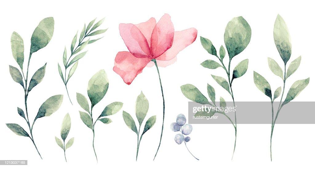 Satz von Aquarell Blume und grüne Blätter : Stock-Illustration